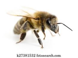 免图片(rf)类版税-蜜蜂艾莎和蜘蛛侠生宝