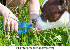 Dog Drink Ice Water Hot Weather