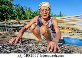 Bild Philippinen Kokosnuss Trocknen In Sonne Mbef000507