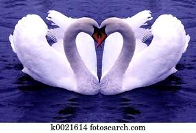 Swans Hearts