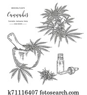 Cannabis sativa or cannabis indica plant. Marijuana leaves and seeds. Medical and cosmetic herbs. Botanical vector illustration. Black and white.