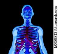 写真素材・動画素材・イラスト素材X 線 イラスト