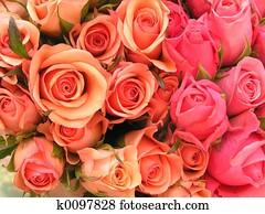 Bed Met Rozen.Beelden Roze Bed Van Rozen K0114098 Zoek Stock Foto S Beelden
