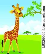 Giraffe eat leaf