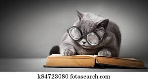 Funny cat in big glasses reading book.
