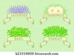 herbs,
