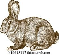 vector engraving rabbit