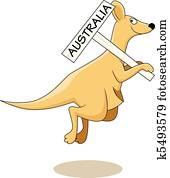 kangaroo Australia