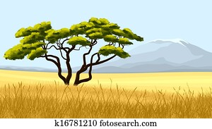 Yellow grass and African acacia.