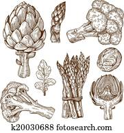 engraving of green vegetables