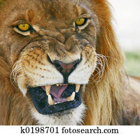 Jungle Mouth
