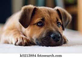 Puppy, up close