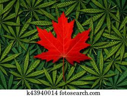 kanadier, marihuana, begriff
