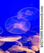 Jellyfish Glow