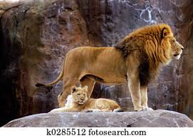 Αφρικανικός pussy.com