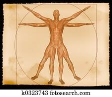Muscle Illustration