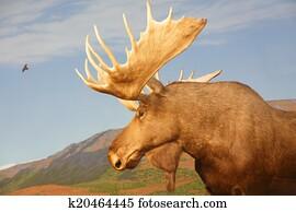 Moose in Canadian Wilderness