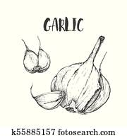 Vector garlic handdrawn seamless pattern in the style of engraving.