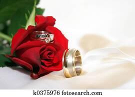 Wedding rings in a rose