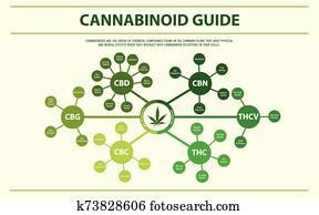 Cannabinoid Guide horizontal infographic
