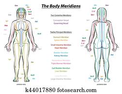 Meridian System Description Chart Female Body