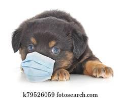 Dog wearing medical face mask.