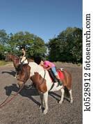 Horse Riding Pleasure