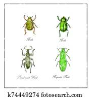 Beetle, Broad-Nosed Weevil and Buprestis Beetle Vintage Collection