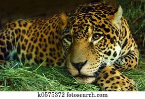 Eye of the Jaguar