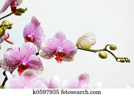 wild orchid free download