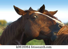 Pferd Spiel