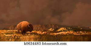 Buffalo in Rockies