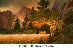 Buffalo in the Rockies