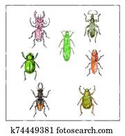 Beetles Vintage Collection on White background
