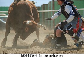 Bull with Rodeo Clown