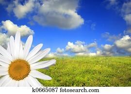 Dream of spring