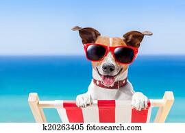 summer vacation dog