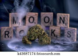 Cannabis flower buds coated in sherry oil and marijuana dust aka moon rocks
