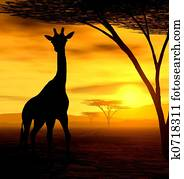 dass, giraffe