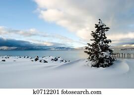 Tree Snow Lake Tahoe