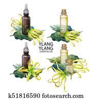 Watercolor ylang ylang oil collection