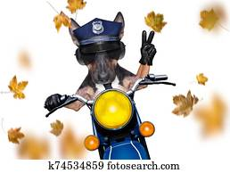 motorcycle police dog on autumn or fall