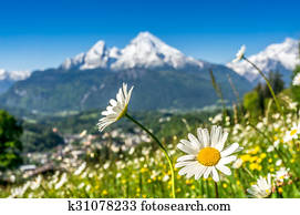 Bavarian Alps with beautiful flowers and Watzmann in springtime, Germany