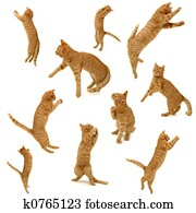 collection of kittens in action