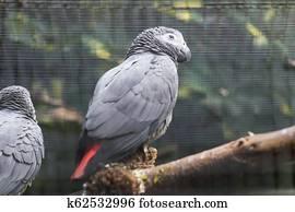 εικόνες πουλί