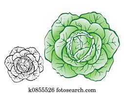 Pulpy cabbage