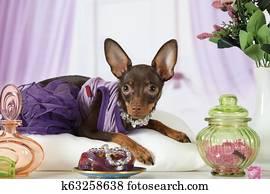 b2b163a7 Ruski Zabawka Terier Pies Szczeniak Leżący Zdjęcia   160 Ruski ...