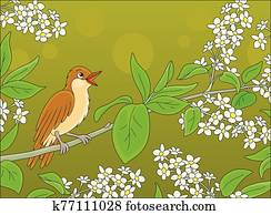 Nightingale singing on a branch with flowers