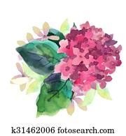 Illustration of Hydrangea flowers