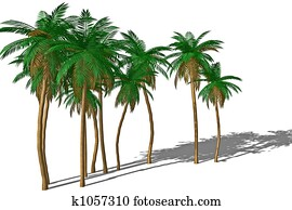 Palm tree and shadow.